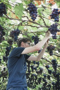 © Senne Van der Ven Jeroen zer druivenserres schoonfamilie verder